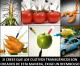 """Alimentación del futuro en """"El SER Creativo"""""""