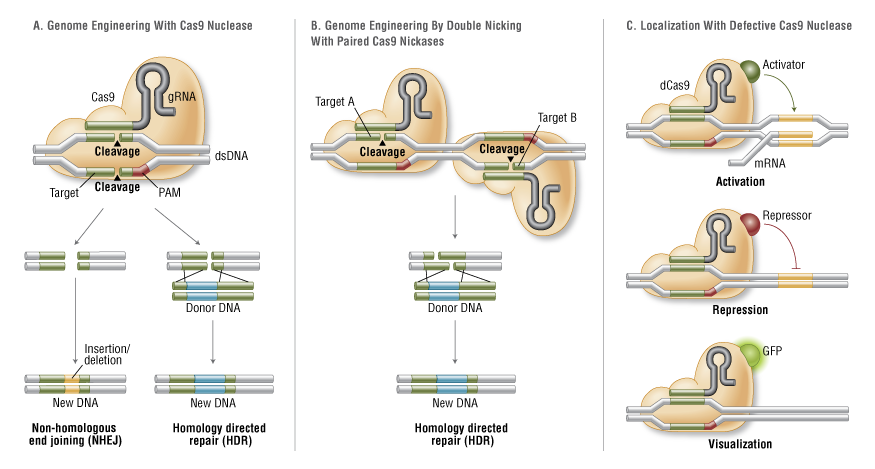 A Broad Overview and Review of CRISPR-Cas Technology and ...