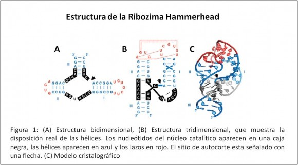 Figura1-Denisse Urbina
