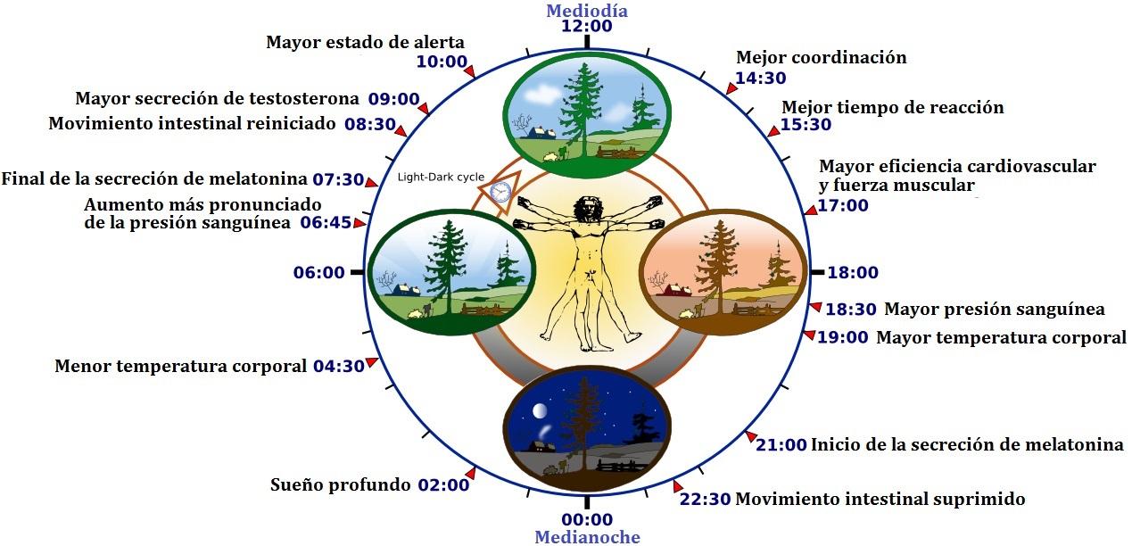 Un Reloj Para Gobernarnos A Todos Plantas Con Jet Lag Tomates Con