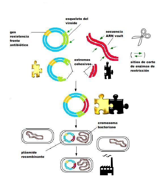 insercion en plasmido6