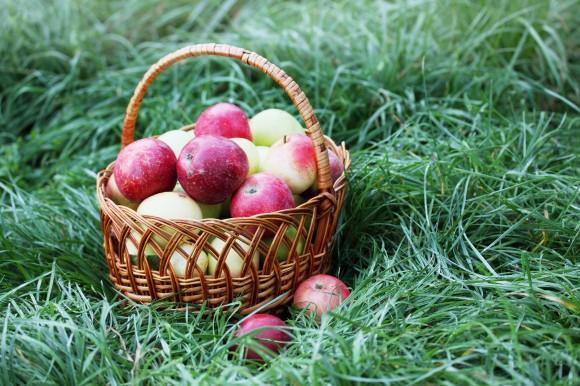 Agricultura ecológica en CV Radio