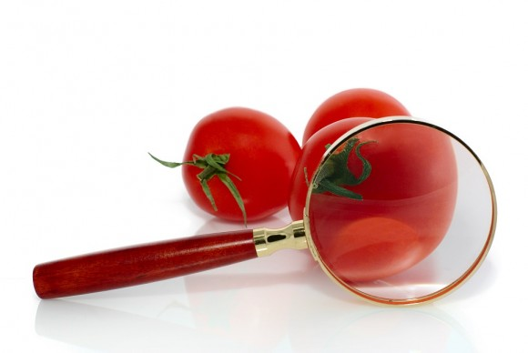 Red fresh tomatos and magnifier, isolated on white