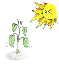 Uno de los estreses de las plantas, las altas temperaturas.