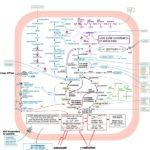 """""""Metabolismo"""" en A Ciencia Cierta."""