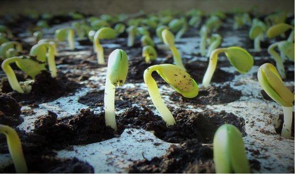 El recubrimiento industrial de semillas y su conexión biotecnológica