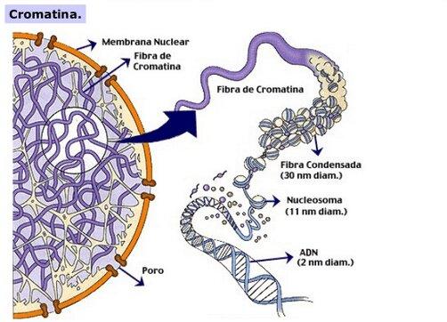 Desempaquetando los genes