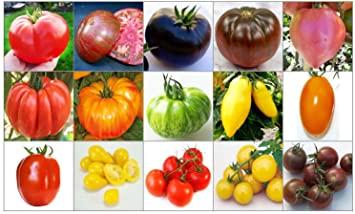 Diversidad en tamaños, colores, formas y sabores en las variedades de tomate actuales)