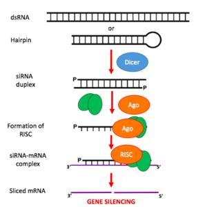Regular genes de plantas nunca fue tan facil, tan solo necesitas... ¿Un pulverizador?