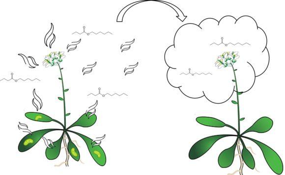 ¿Y si os dijera que las plantas hablan?