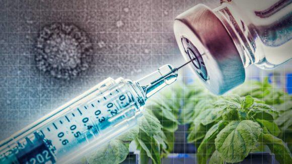 Vacunas en plantas: ¿Sueño, mito o realidad?